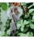 Porte-clés de patinage, Fluffy Fourrure grise, Brilliance & Melrose